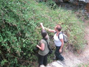 monte intraleo 2012 (8)
