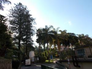 giardino-interno-ospedale-vittorio-emanuele-13gennaio2019-1
