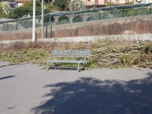 siepe-oleandro-decapitata-largo-mario-merola-29marzo2019-4