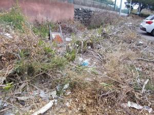 siepe-parcheggio-parco-gioeni-largo-mario-merola-14aprile2019-1