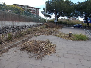 siepe-parcheggio-parco-gioeni-largo-mario-merola-14aprile2019-3