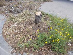 siepe-parcheggio-parco-gioeni-largo-mario-merola-14aprile2019-4