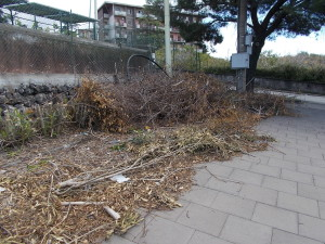 siepe-parcheggio-parco-gioeni-largo-mario-merola-14aprile2019-6