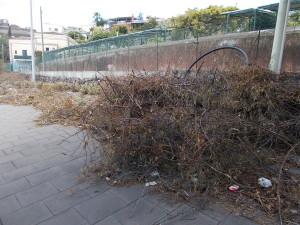 siepe-parcheggio-parco-gioeni-largo-mario-merola-14aprile2019-8