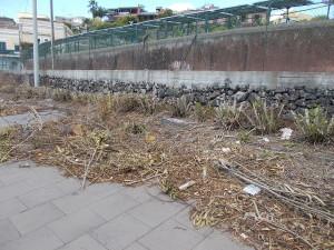 siepe-parcheggio-parco-gioeni-largo-mario-merola-14aprile2019-9