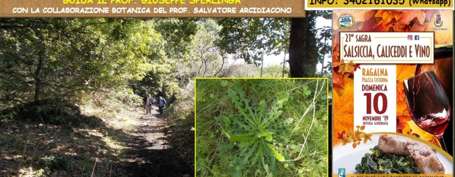 locandina-sentiero-regina-e-sagra-sasizza-caliceddi-vino-10novembre2019
