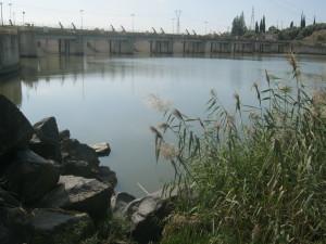 ambiente-umido-di-ponte-barca-di-paterno-simeto