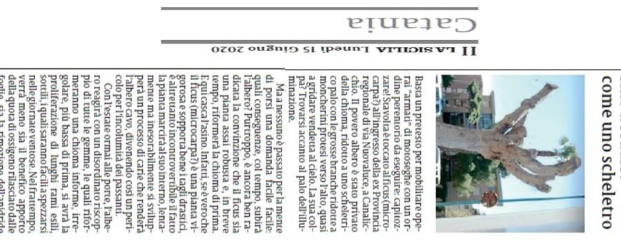ficus-decapitato-via-novaluce-la-sicilia-15giugno2020