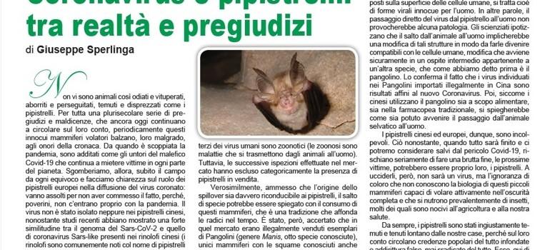 grifone-coronavirus-e-pipistrelli