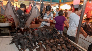 pipistrelli-in-vendita