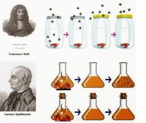 esperimenti-di-redi-e-spallanzani