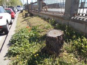 passiatore-via-vi-aprile-fontana-proserpina-30aprile2019-31