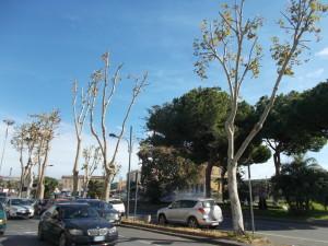 platani-capitozzati-via-vi-aprile-28ottobre2020-24
