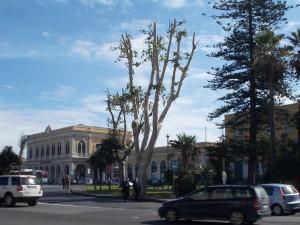 platani-capitozzati-via-vi-aprile-28ottobre2020-3