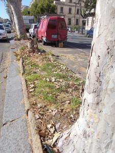 platani-capitozzati-via-vi-aprile-28ottobre2020-8
