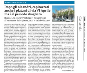 platani-via-vi-aprile-la-sicilia-30ottobre2020