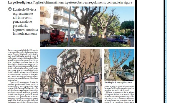 ficus-capitozzati-largo-bordighera-la-sicilia-4novembre2020