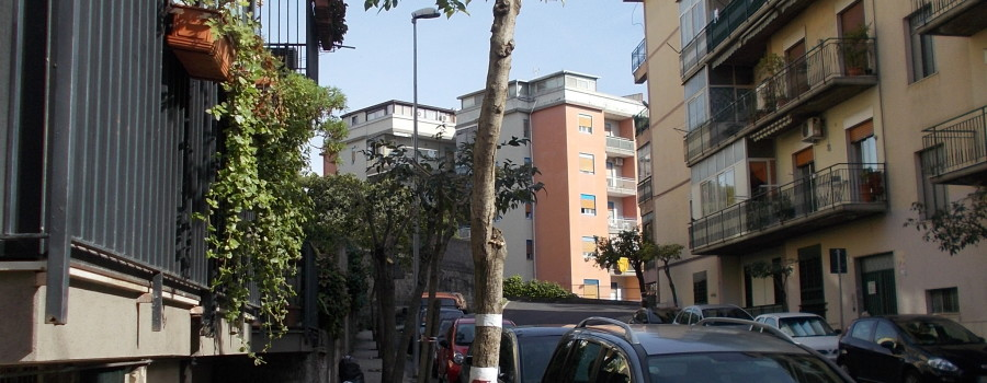ligustri-capitozzati-via-brancati-fasano-30ottobre2020-4