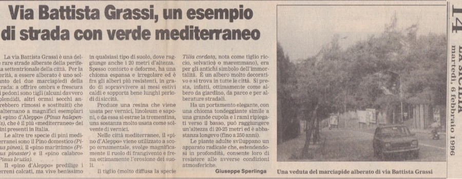 alberi-via-grassi-la-sicilia-6febbraio1996