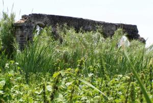 ruderi-acquedotto-benedettino-ambiente-umido-timpa-di-leucatia