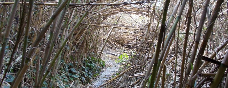 ruscelli-ambiente-umido-timpa-leucatia-13febbraio2020-1