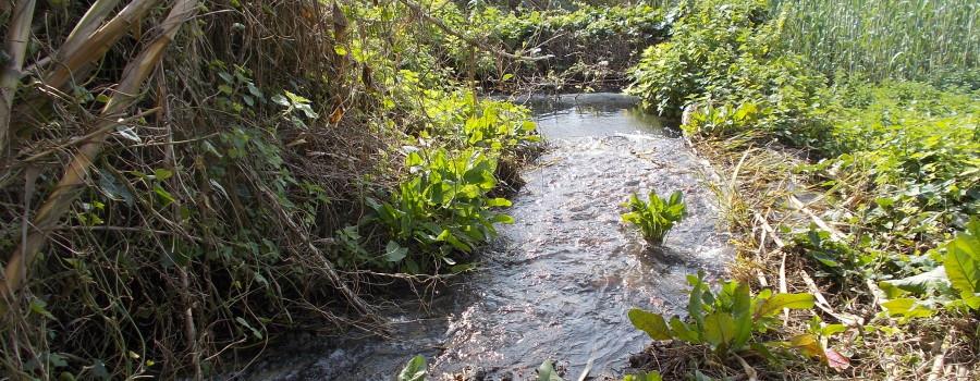ruscelli-ambiente-umido-timpa-leucatia-13febbraio2020-2