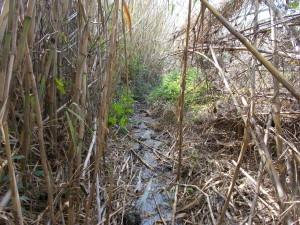 ruscelli-ambiente-umido-timpa-leucatia-13febbraio2020-3