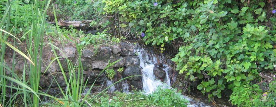 ruscello-ambiente-umido-timpa-di-leucatia
