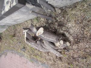 capitozzatura-siepe-bouganville-parco-gioeni-7marzo2021-5