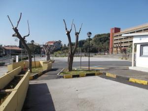 capitozzature-ospedale-cannizzaro-28febbraio2021-4