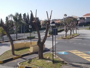 capitozzature-ospedale-cannizzaro-28febbraio2021-6