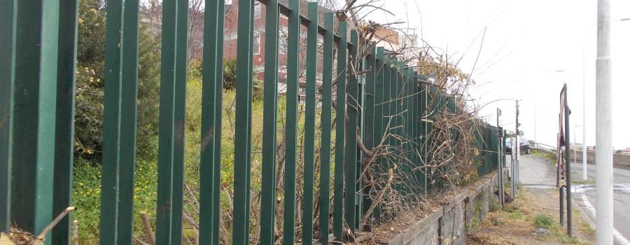 siepe-bouganville-parco-gioeni-recinzione-sud-8marzo2021-1
