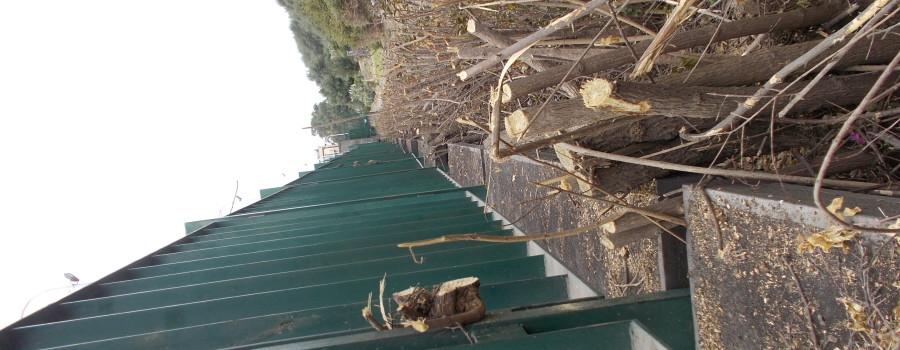 siepe-bouganville-parco-gioeni-recinzione-sud-8marzo2021-14