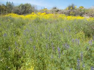 fioritura-primaverile-nel-parco-gioeni-30marzo2021
