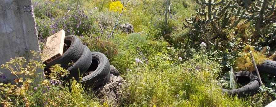 fioriture-via-santa-sofia-terreno-incolto-rotatoria-agraria-8aprile2021-3