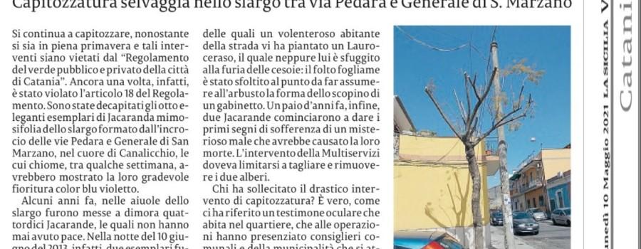 jacarande-via-pedara-la-sicilia-10maggio2021