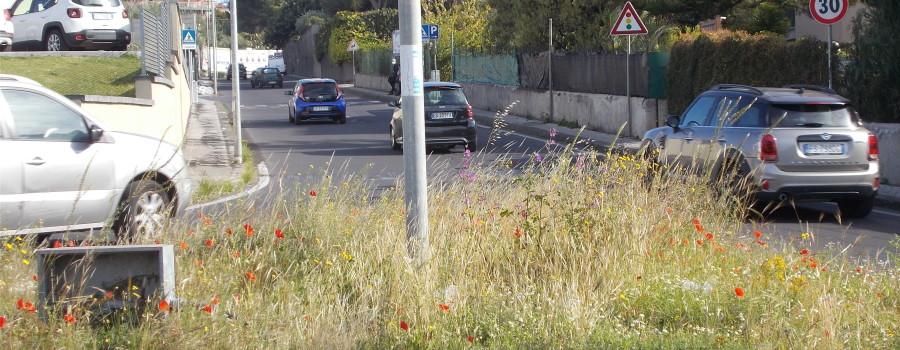 fioriture-spontanee-aiuole-rotatoria-via-novaluce-7aprile2021-8