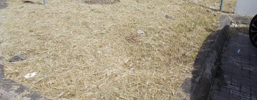 piazza-tivoli-di-canalicchio-dopo-il-taglio-delle-piante-selvatiche-in-fiore-28aprile2021-3