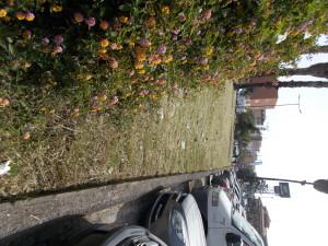 piazza-tivoli-di-canalicchio-dopo-il-taglio-delle-piante-selvatiche-in-fiore-28aprile2021-5