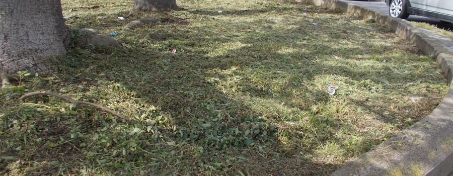 piazza-tivoli-di-canalicchio-dopo-il-taglio-delle-piante-selvatiche-in-fiore-28aprile2021-6